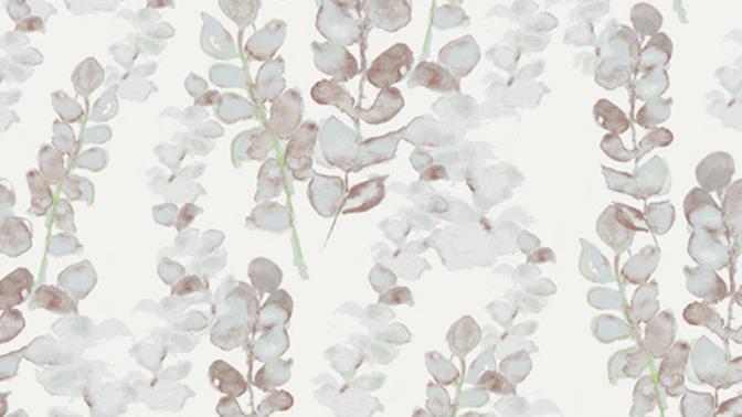 Eucalyptus 510443