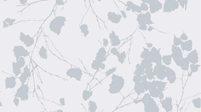 Birch Leaves 510223