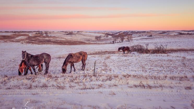 Custom Winter Ranch