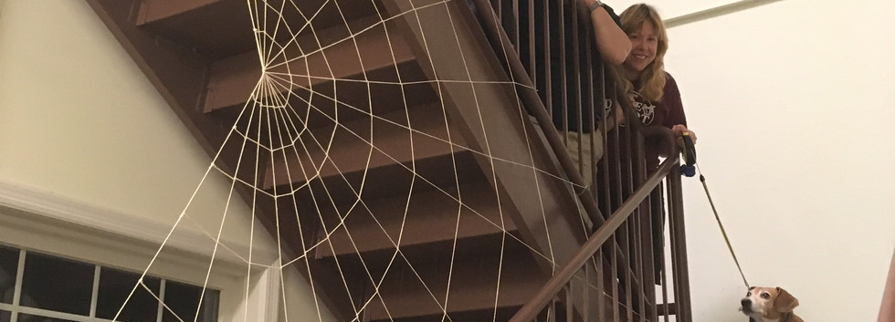 042-spiderweb2018.jpg