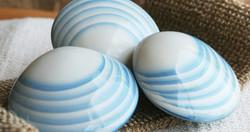 glacial-shells-troy-ohio-1.jpg