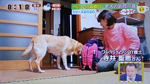 老犬の訪問介護で紹介された老犬介護士 寺井聖恵