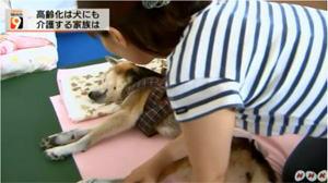 柴犬 元気くんの訪問介護のようす 介護士 寺井聖恵