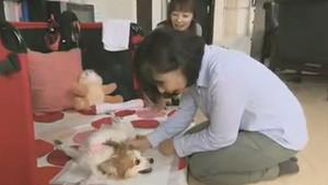 パピヨンのポッキーちゃんの訪問介護