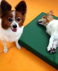 犬用ベッド 低反発