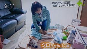 2014年4月 日本テレビの番組で紹介されました
