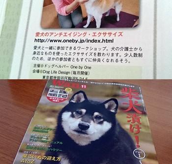 2014年11月 雑誌に掲載されました