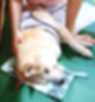やさしい安心な老犬介護