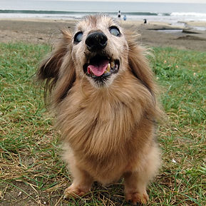 めざそう元気シニア犬セミナー