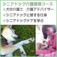 老犬介護士、犬の介護アドバイザー