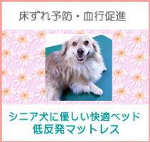 愛犬の床ずれ予防に優れたベッド