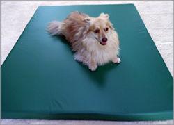 犬の介護用品