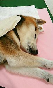 犬用低反発マット