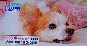 2014年2月 TBSのテレビ番組で紹介されました