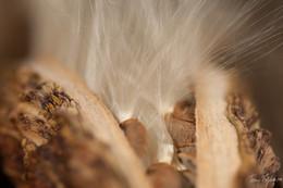 Untitled (Seed pod)