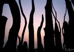 Kraal Sunset