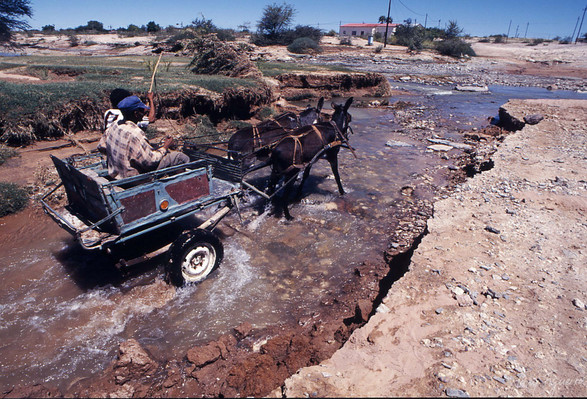 River Donkey Cart