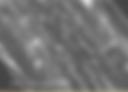 Microscopic Image of Untreated Hemp Bast Fibers - American Hemp LLC Example