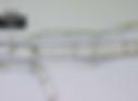 Microscopic Image of Hemp Bast Fiber Surface and Size - American Hemp LLC Example