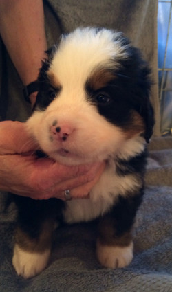 Dottie 5 weeks