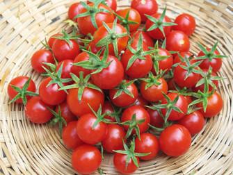 עגבניות זה לא בדיחה! מתכוני עגבניות ועגבניית שרי