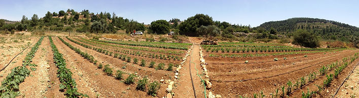 A panoramic photo shot of the farm in early days
