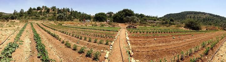 תמונה פנורמית של החווה