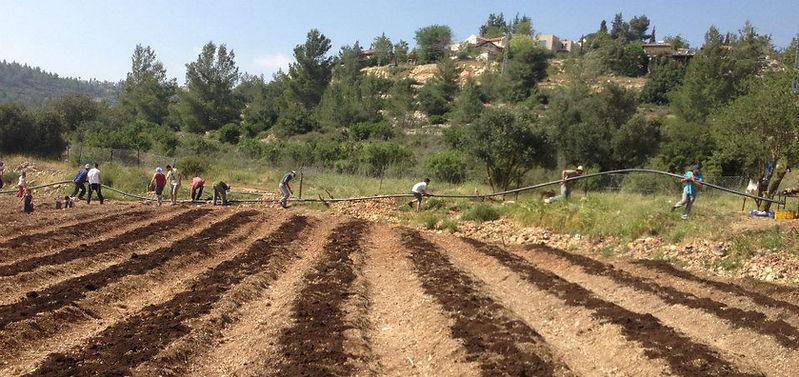 מתנדבים בעת הנחת צינור מים ראשי בחווה