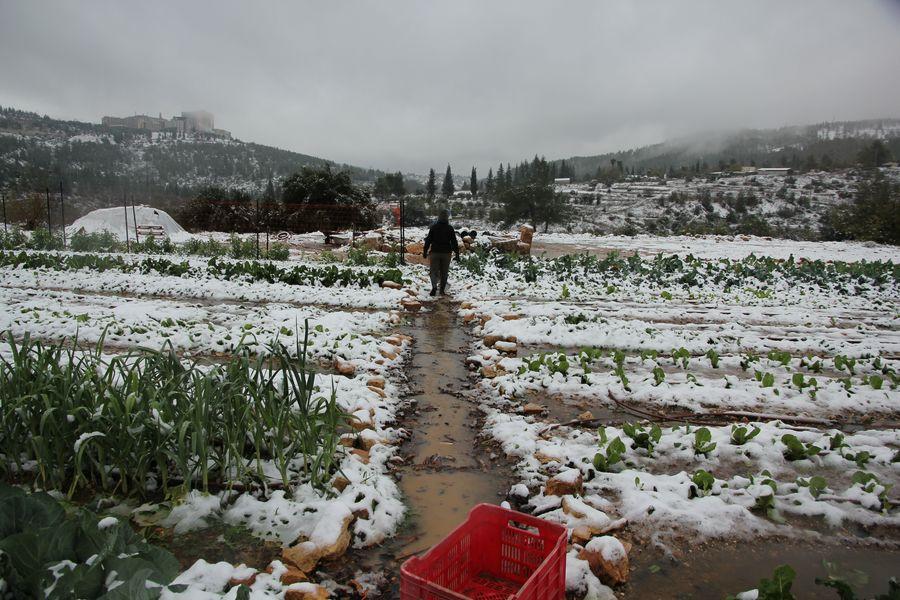 חקלאי בחווה בשנה שעברה.jpg