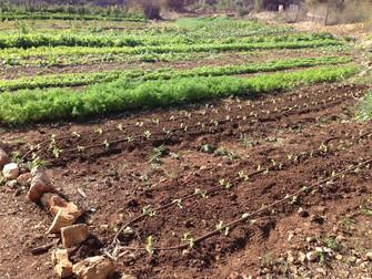עלון מס' 71: 4.11.14 - ירוק בחווה, הקור הירושלמי וביקור בכנס סלאו פוד באיטליה...
