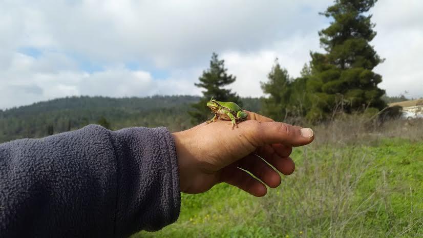 צפרדע על יד החקלאי.jpg