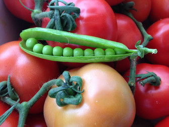 עלון מס' 4: 10.7.2013 - על עגבניות, וותיקי המושב ופטנט לשמירה על תבלינים