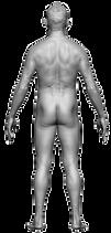 Body Reference Back