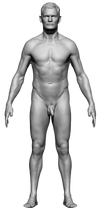 Body Reference Front
