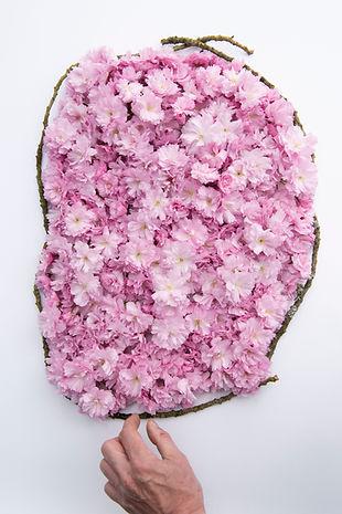 Fleurs cerisier fond 8135.jpg
