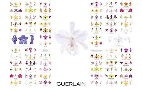 Lund x Mauviel for GUERLAIN ORCHIDARIUM