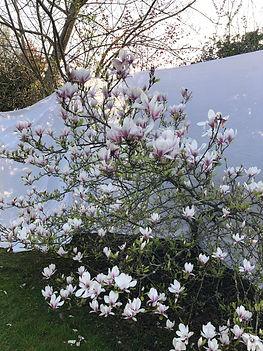 lund x mauviel magnolia normandy studio