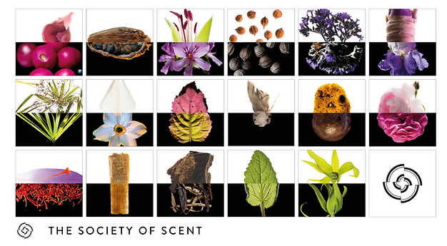 Lund_x_Mauviel_for_Society of Scent