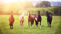 team_of_horses-451870861