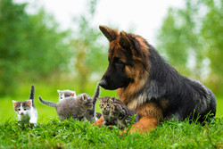 cats_dogs_0301014_820px