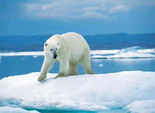 Climate Change: Science Settled; Politics Disrupted.
