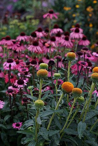 Ecologische kwekers van vaste planten