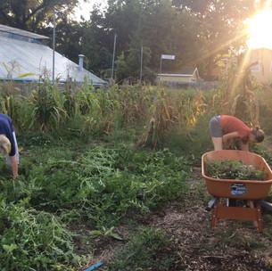 garden wheelbarrow sunset.jpg