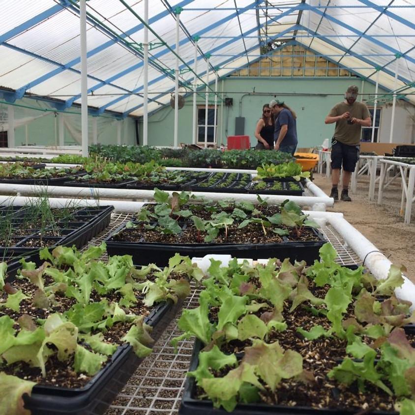 Sunrise Project Plant Sale