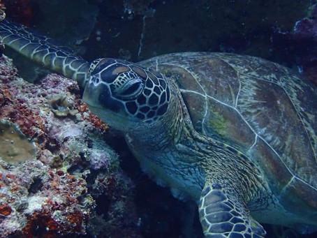 Hoe een schildpad een haas werd