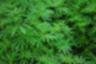 foliage-1157792_1920.jpg