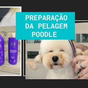 AULA N° 12: Preparação da pelagem, poodle.