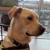Equipo canino, Asociación Entrecanes