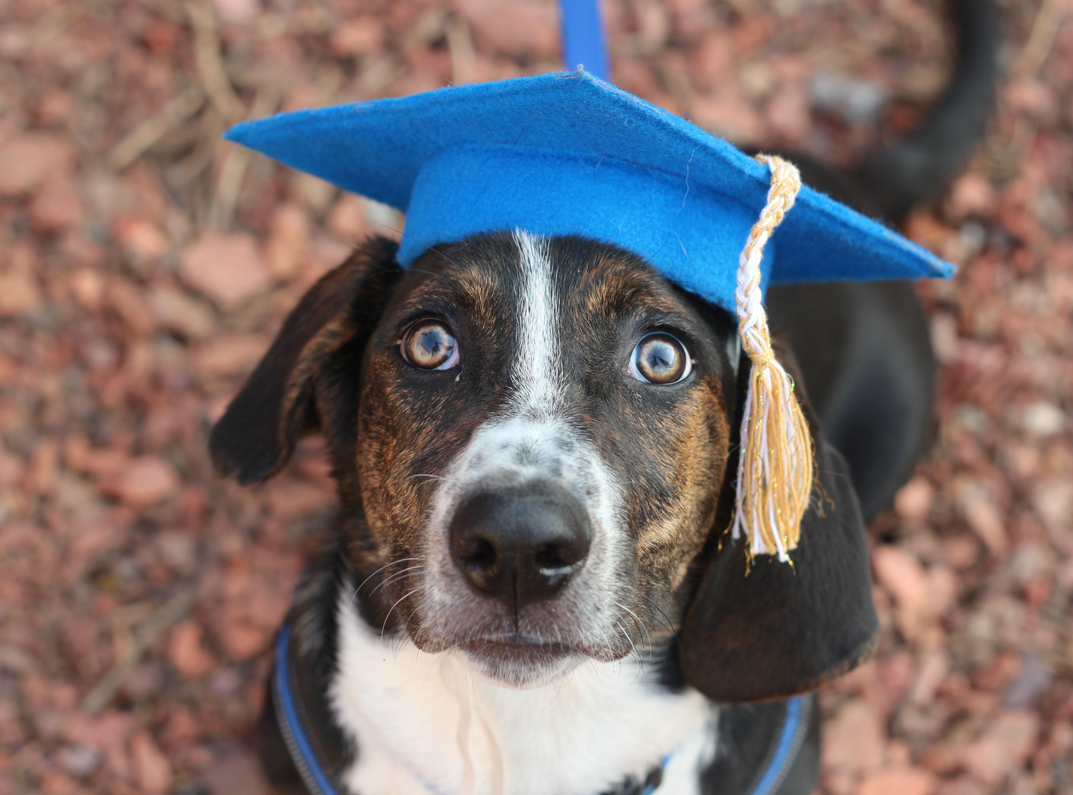 Puppy class (FULL)