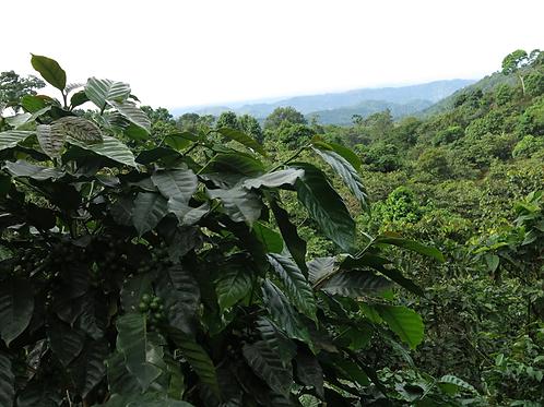 Mexico Organic Grupo de Bella Vista